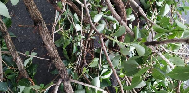 Рухнувшие деревья: как Днепра пережил непогоду (ФОТО)