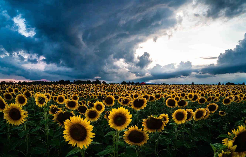 Новости Днепра про Вечером возможен дождь: погода на 6 июня