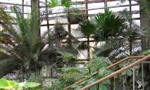 Мастер-классы, эксперименты и викторины: днепрян приглашают посетить Ботсад