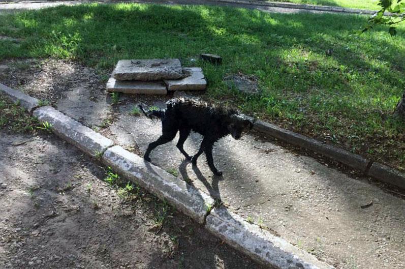 Новости Днепра про Спасатели помогли беспомощной собаке (ФОТО)
