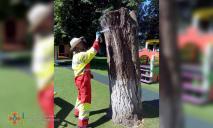 В Днепре рой насекомых поселился на детской площадке