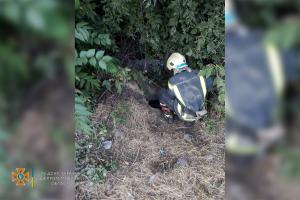 Новости Днепра про Спасатели освободили собаку из «ловушки»