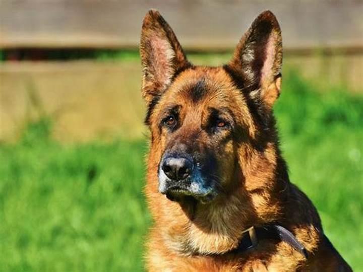 Новости Днепра про Ищут с собаками: под Днепром несколько дней разыскивают мужчину