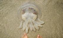 На Азовском побережье придумали, как избавиться от медуз: борец стал героем сети