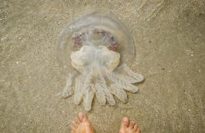 Новости Днепра про На Азовском побережье придумали, как избавиться от медуз: борец стал героем сети