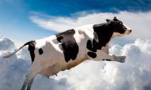 На 3D-принтере впервые напечатали кусок говядины: он съедобный и дешевый