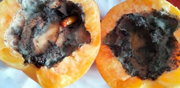 Червь размером с мизинец: днепрянка купила в VARUS гнилые персики с «белком»