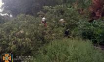 Масса поваленных деревьев: как ликвидировали непогоду в Днепре