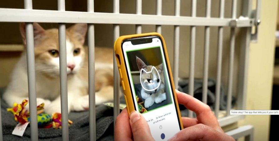 Новости Днепра про Что чувствует ваш кот: создали приложение, которое определяет состояние питомца по фото