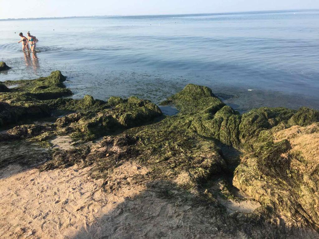 Новости Днепра про На Азовском море новая напасть: и это не медузы (ФОТО)
