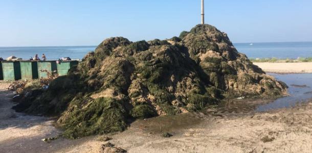 Не медузы, так водоросли: пляжи Бердянска завалило тоннами морской травы (ВИДЕО)