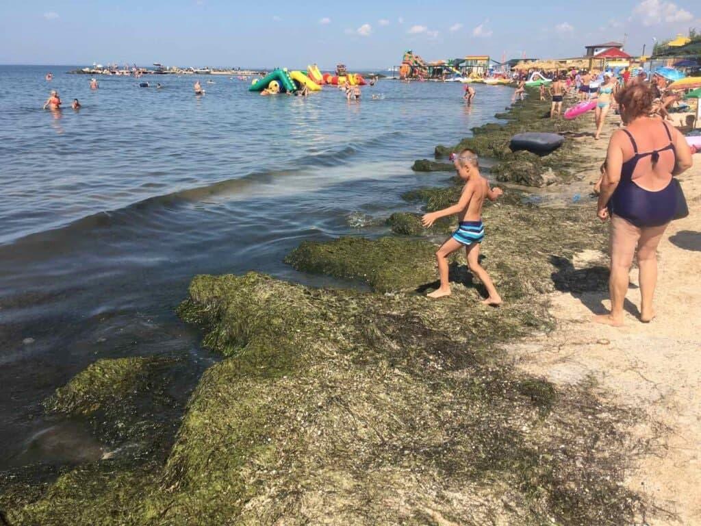 Новости Днепра про Не медузы, так водоросли: пляжи Бердянска завалило тоннами морской травы (ВИДЕО)