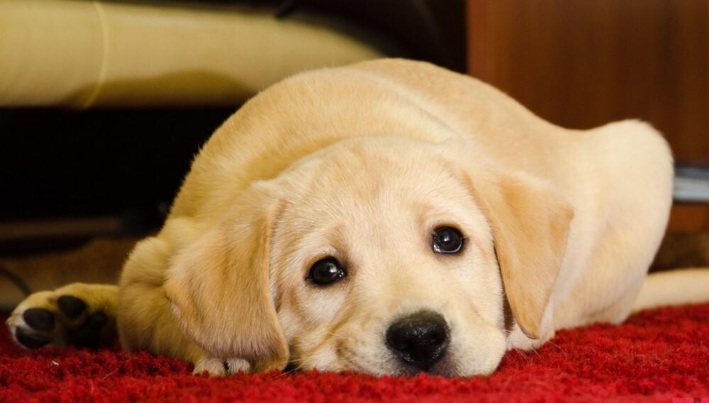 Новости Днепра про На Левобережном-3 местная компания превратила площадку для собак в бар