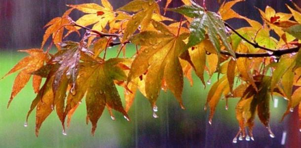 Погода в Днепре в четверг, 23 сентября: будет пасмурно и дождливо