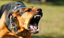 Под Днепром бродячая собака набросилась на ребенка и искусала лицо