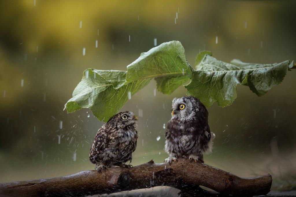 Новости Днепра про Погода в Днепре во вторник, 21 сентября: пасмурно и дождливо