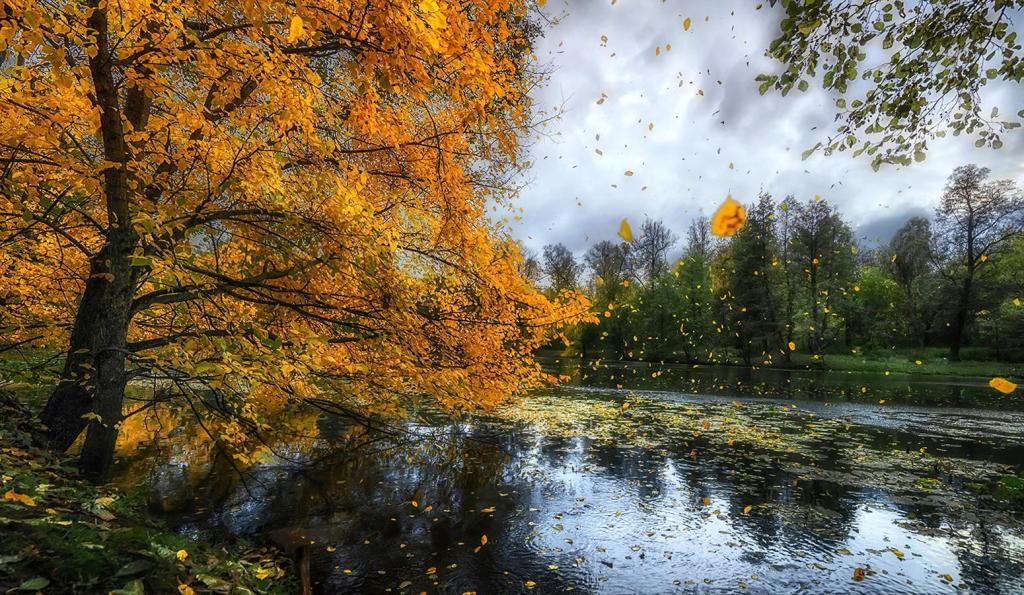 Новости Днепра про Погода в Днепре в субботу, 25 сентября: пасмурно, возможен дождь