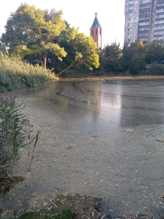 Новости Днепра про Покрылось непонятной белой пленкой: на Победе-6 озеро превращается в болото