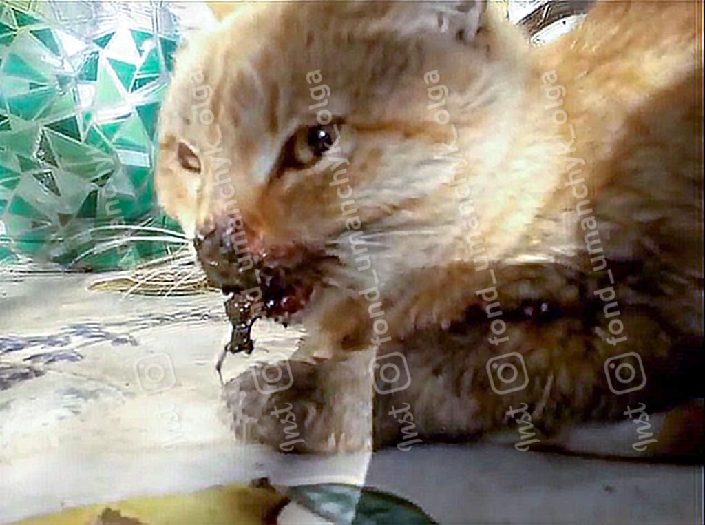 Новости Днепра про Сбила машина: в Днепре спасают котенка со сломанной челюстью