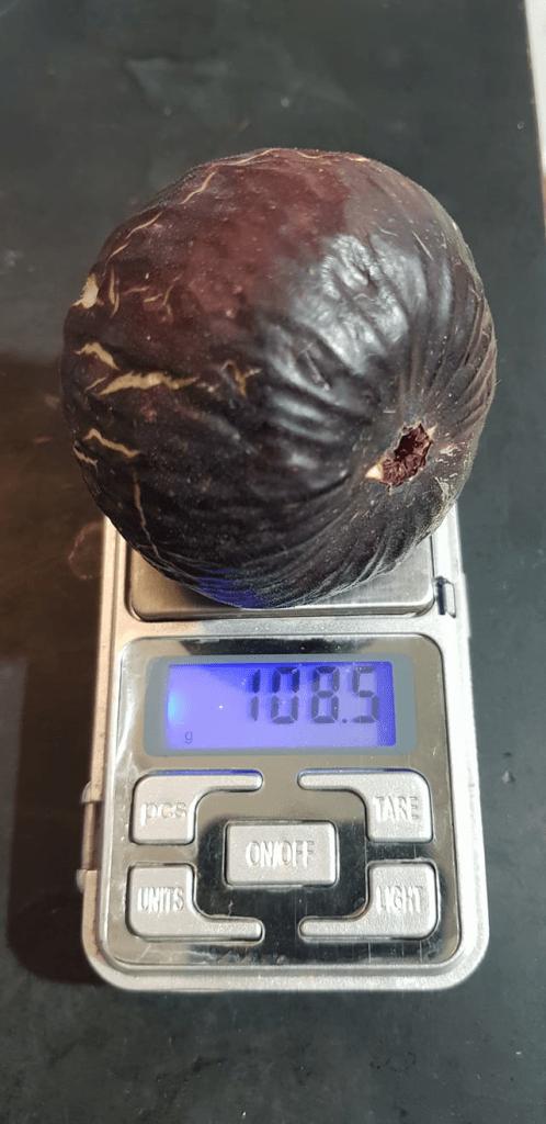 Новости Днепра про Ягоды-тяжеловесы: в Никополе фермер вырастил гигантский инжир