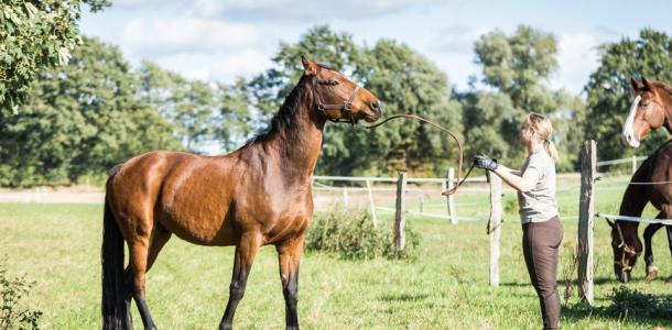 Отдадут коня в хорошие руки: на Орловщине закрывают спортивную школу