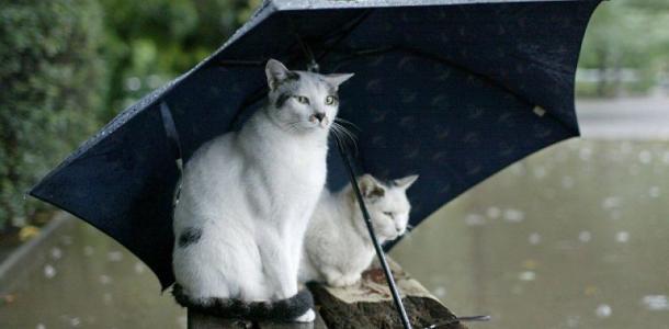 В воскресенье днепрян ждет дождливая погода