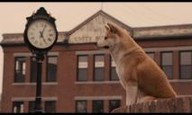 Хатико по-днепровски: на остановке Парк Сагайдак во второй раз брошенная собака ждет своего хозяина