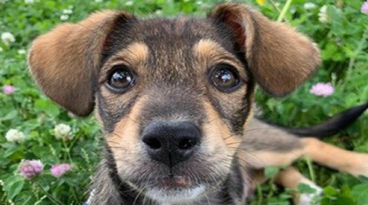 Новости Днепра про Он стал им не нужен: с балкона многоэтажки выбросили щенка