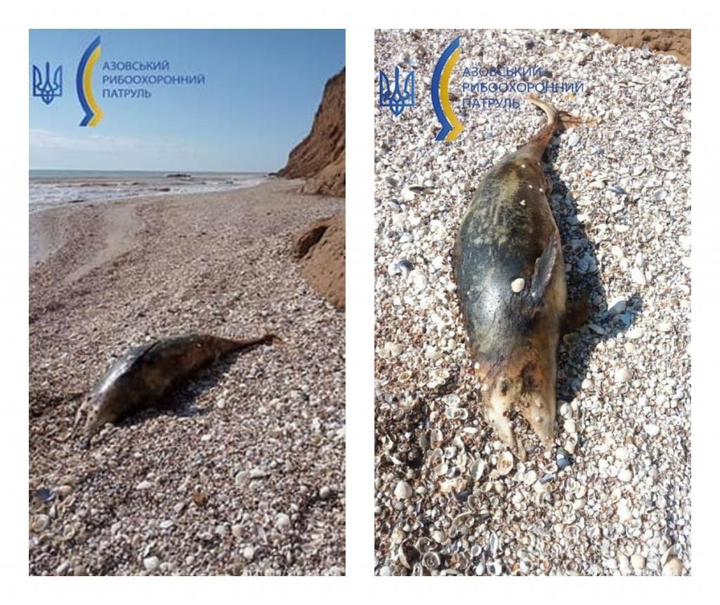 Новости Днепра про На берег Азовского моря выбросило мертвых дельфинов: что произошло