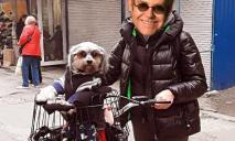 На 12 Квартале заметили собаку Элтона Джона на велосипеде