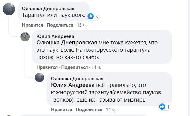 Новости Днепра про В Днепре на Игрени заметили паука-волка (ФОТО)