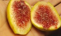 Экзотика: мужчина на Днепропетровщине вырастил эксклюзивные фрукты