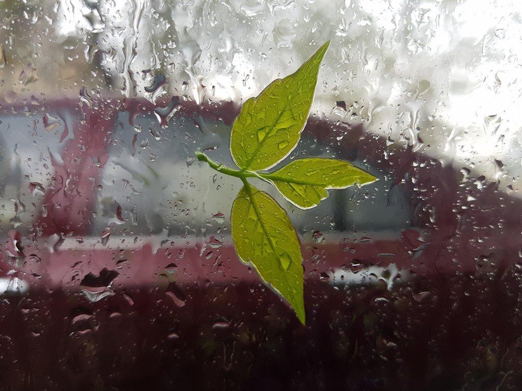Новости Днепра про В воскресенье днепрян ждет дождливая погода