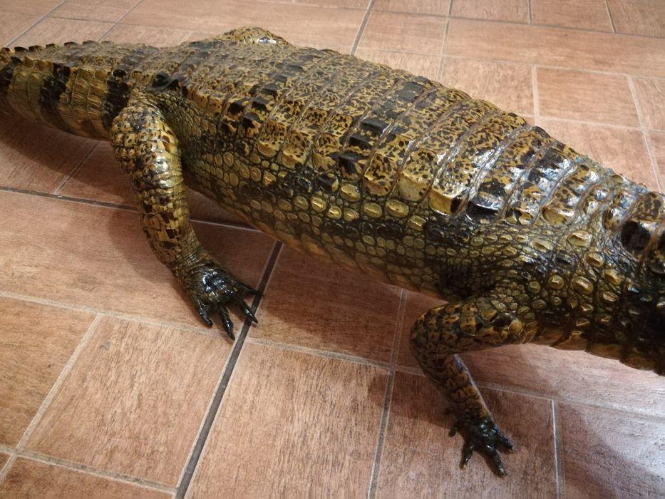 Новости Днепра про Живой конь и мертвый крокодил: что и за сколько продают днепряне на OLX