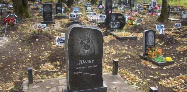 Видны трупы животных: на Клочко сравняли с землей кладбище домашних питомцев (ФОТО)