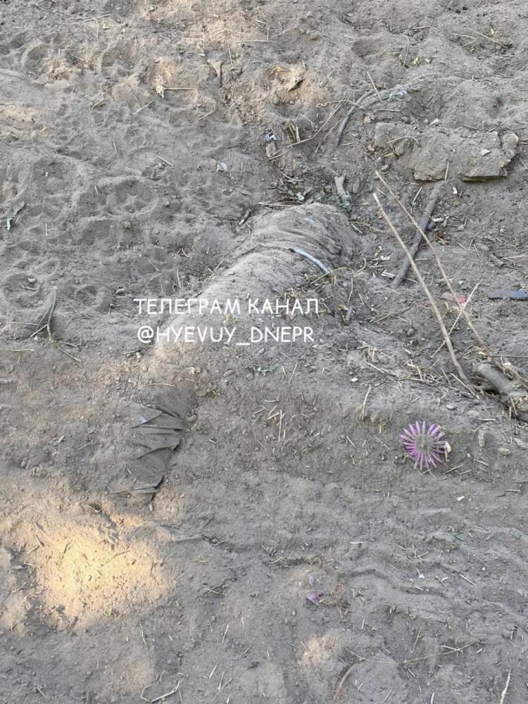 Новости Днепра про Видны трупы животных: на Клочко сравняли с землей кладбище домашних питомцев (ФОТО)