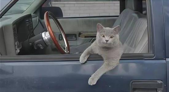 По цене 5 Жигулей: как выглядит котенок, которого в Днепре продают за 50 тысяч гривен (ФОТО)