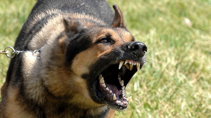 Новости Днепра про Шрамы на лице: в Днепре прооперировали девочку, которую покусала собака
