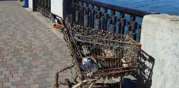 На металле сотни моллюсков: в Днепре на набережной из воды достали тележку из Сильпо (ФОТО)