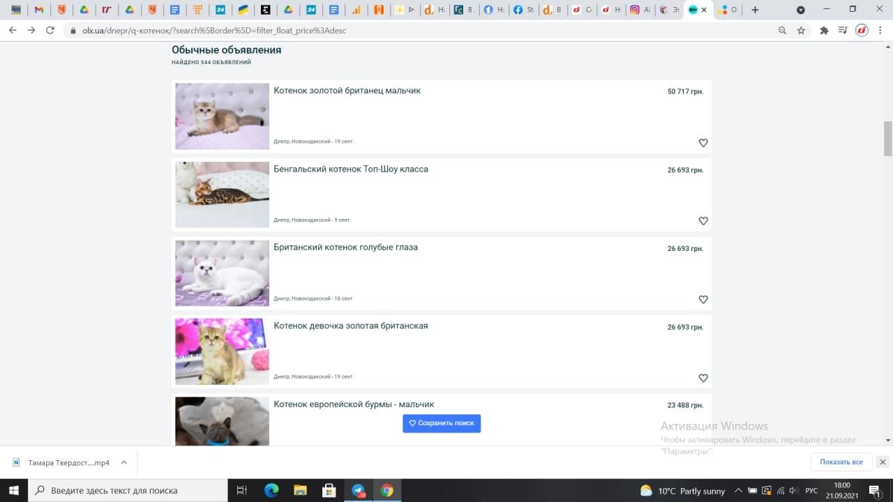 Новости Днепра про По цене 5 Жигулей: как выглядит котенок, которого в Днепре продают за 50 тысяч гривен (ФОТО)