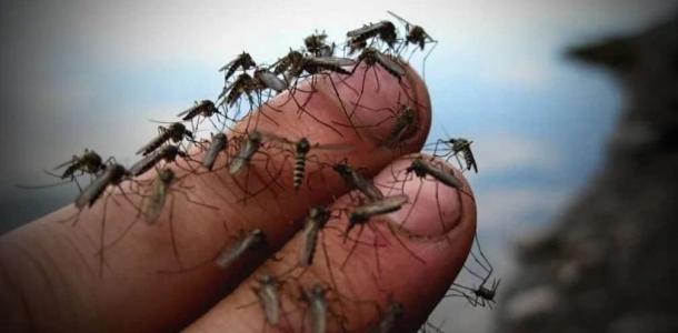 Живое темное облако: Бердянск атакуют тучи комаров