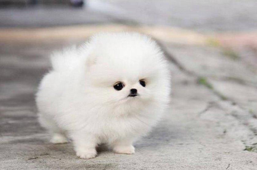 щенок Днепр