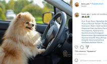 Водит Audi и играет в теннис: в сети набирает популярность днепровский пес-блогер