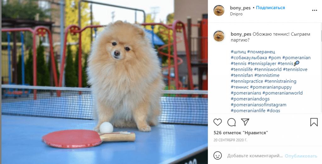 Новости Днепра про Водит Audi и играет в теннис: в сети набирает популярность днепровский пес-блогер