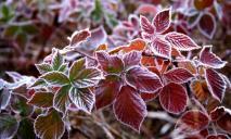 Первый уровень опасности: синоптики предупреждают о заморозках в Днепре