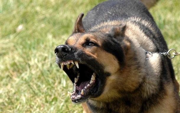 Новости Днепра про Разорванные джинсы и испуг: на Красном Камне на женщину напали бездомные собаки