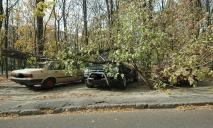 В Днепре на Тополе огромная ветка рухнула на две припаркованные машины