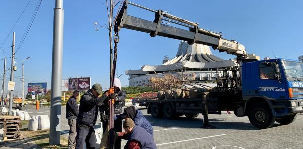 На первой в Днепре экопарковке начали высаживать молодые деревья