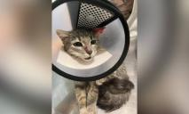 Ушко и часть головы сильно пострадали: нужна помощь котенку Реечке
