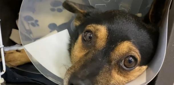 Чипу нужна помощь: в Днепре хозяева оставили больного пса в ветклинике